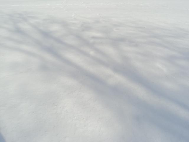 Jan 2011 002